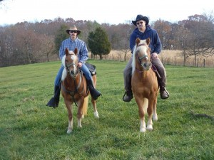 Haflinger Horses Under Saddle