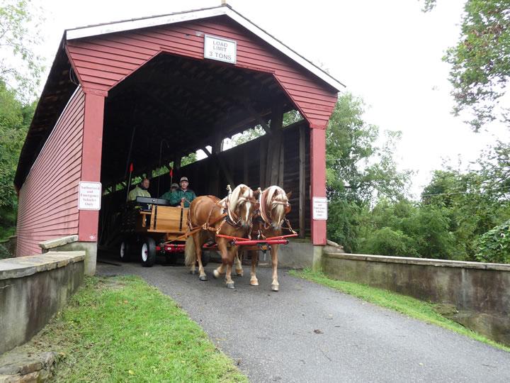 About Haflinger Horses : Bryan Hill Farm