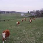 Herd_fs