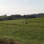 herd_2_fs