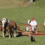 horses_pulling_sled_fs