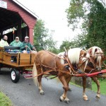Haflinger Fair Hill 108