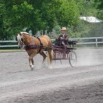 Lily_Tville_Horse_Show_2a